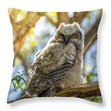 Great-horned Owlet In Spring Throw Pillow by Yeates Photography