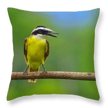 Great Kiskadee Throw Pillow by Tony Beck