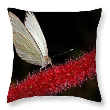 Throw Pillow featuring the photograph Great Southern White by Judy Vincent