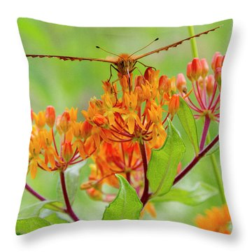 Great Spangled Fritillary II Throw Pillow