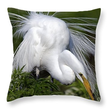 Great White Egret Displaying Plumage Throw Pillow by Mary Lou Chmura