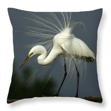 Majestic Great White Egret High Island Texas Throw Pillow