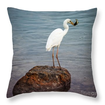 Great White Heron With Fish Throw Pillow by Elena Elisseeva