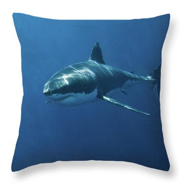 Hammerhead Shark Throw Pillows