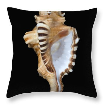 Great White Tooth Throw Pillow by Dave Fleetham - Printscapes