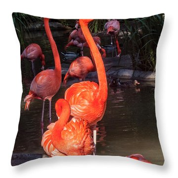 Greater Flamingo Throw Pillow by Daniel Hebard