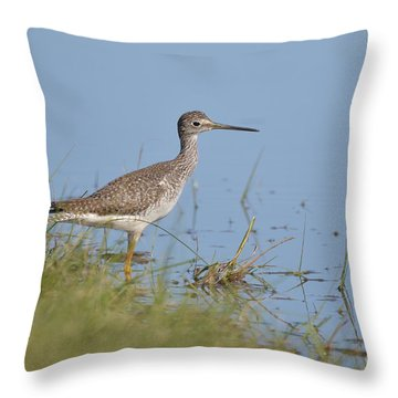Greater Yellowlegs Throw Pillow by Kathy Gibbons