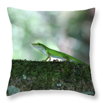 Green Anole Posing Throw Pillow by Christopher L Thomley