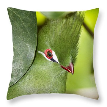 Green Turaco Bird Portrait Throw Pillow