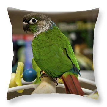 Green Cheek Conure Throw Pillow
