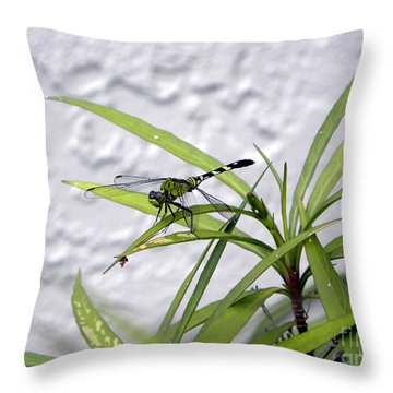 Throw Pillow featuring the photograph Green Dragonfly by Terri Mills