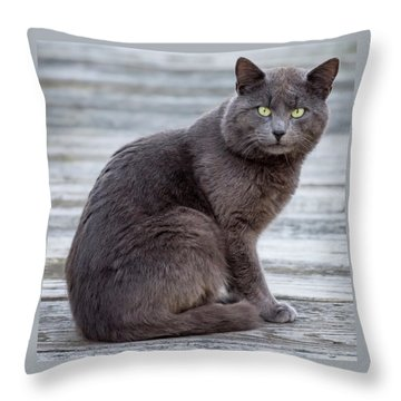 Green Eye Stare Cat Square Throw Pillow by Terry DeLuco