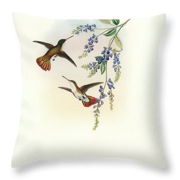 Throw Pillow featuring the painting Green-fronted Hummingbird Amazilia Viridifrons by John and Elizabeth Gould