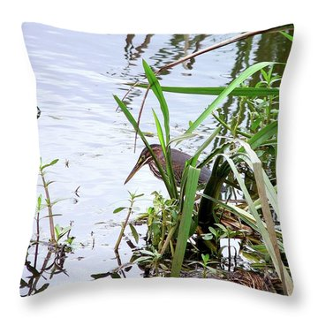 Green Heron Throw Pillow by Al Powell Photography USA