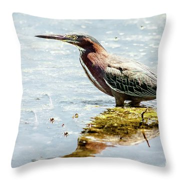 Green Heron Bright Day Throw Pillow by Robert Frederick