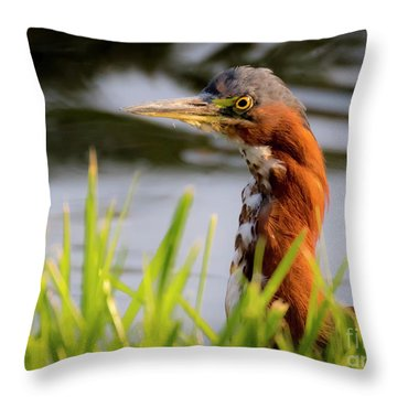 Green Heron Closeup  Throw Pillow
