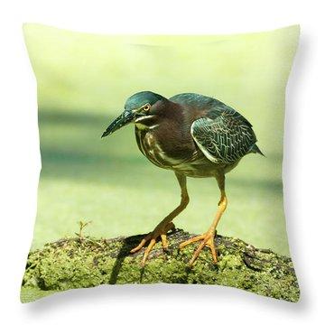 Green Heron In Green Algae Throw Pillow