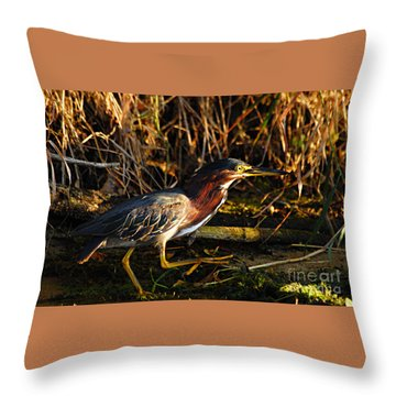 Throw Pillow featuring the photograph Green Heron by Larry Ricker