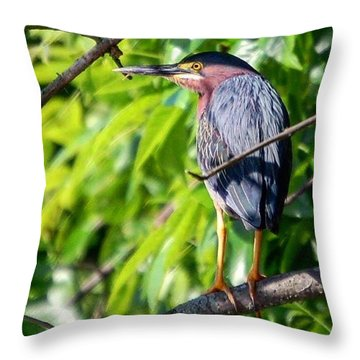 Green Heron Throw Pillow by Sumoflam Photography