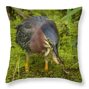 Green Heron With Prey Throw Pillow
