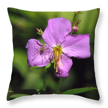 Green Lynx Spider On Meadow Beauty Throw Pillow