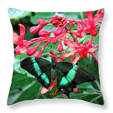 Green Moss Peacock Butterfly Throw Pillow by Betty Buller Whitehead