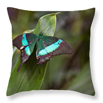 Green Moss Peacock Butterfly Throw Pillow