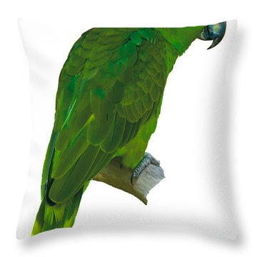 Green Parrot On White  Throw Pillow