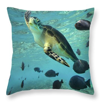 Throw Pillow featuring the photograph Green Sea Turtle Balicasag Island by Tim Fitzharris