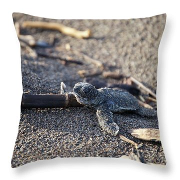Throw Pillow featuring the photograph Green Sea Turtle Hatchling by Breck Bartholomew
