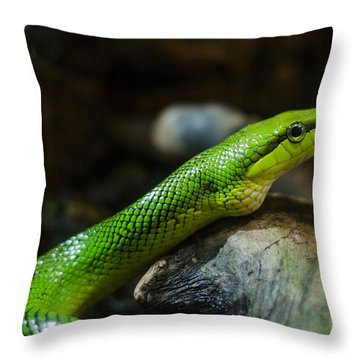 Green Snake Throw Pillow by Daniel Precht