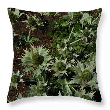 Green Thistles In Botanical Garden Of Bern Throw Pillow