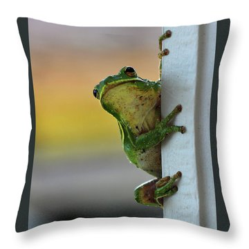 Green Tree Frog  It's Not Easy Being Green Throw Pillow