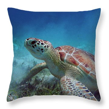 Green Turtle Throw Pillow by Kimberly Mohlenhoff