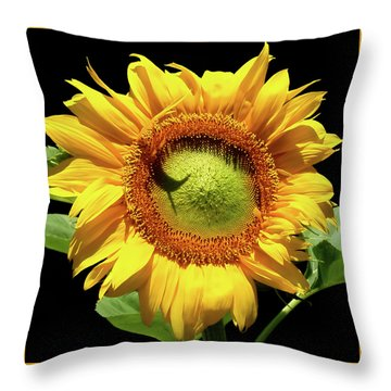 Greenburst Sunflower Throw Pillow by Rona Black