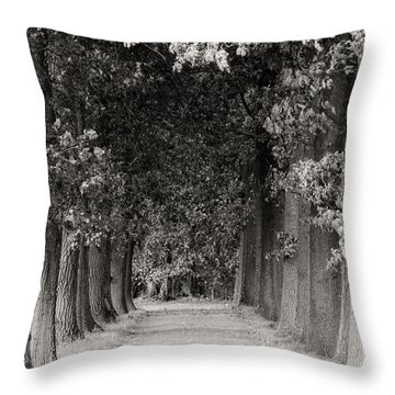 Greeted By Trees Throw Pillow