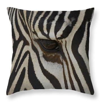 Grevys Zebra Equus Grevyi Close Throw Pillow by Zssd