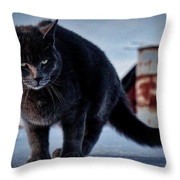 Grey Cat, Grey Mood Throw Pillow
