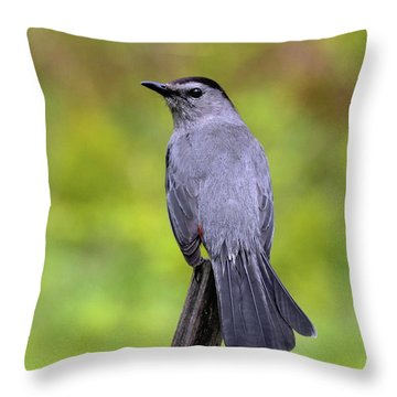 Throw Pillow featuring the photograph Grey Catbird by Debbie Stahre