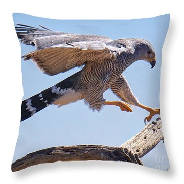 Grey Hawk Alights Throw Pillow