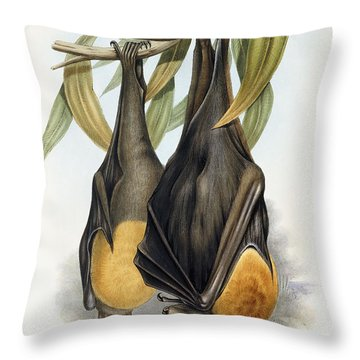 Grey Headed Flying Fox, Pteropus Poliocephalus Throw Pillow by John Gould