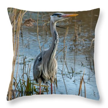 Grey Heron Hunting Throw Pillow