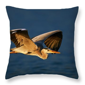 Grey Heron In Flight Throw Pillow