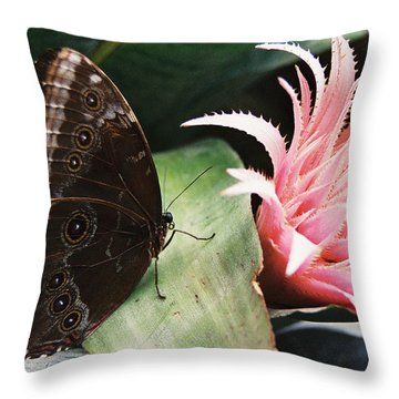 Grey Pansy Pink Bromeliad Throw Pillow