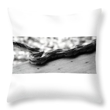 Grey Rat Snake Throw Pillow