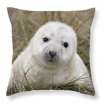 Grey Seal Pup Throw Pillow