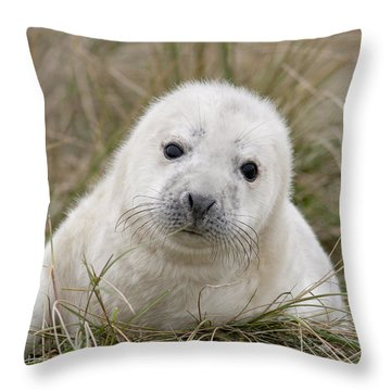Grey Seal Pup Throw Pillow