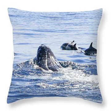 Grey Whale 1 Throw Pillow