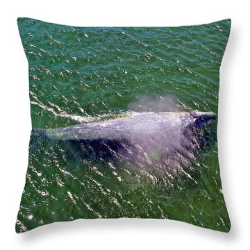 Grey Whale Throw Pillow
