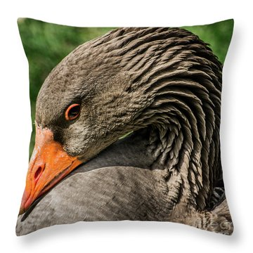 Greylag Goose Portrait  Throw Pillow by Gary Whitton